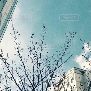 空の写真・画像素材[251196]
