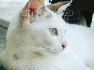 No.258325 猫