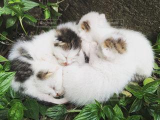 猫の写真・画像素材[259006]