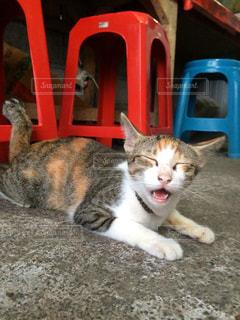 猫の写真・画像素材[261062]