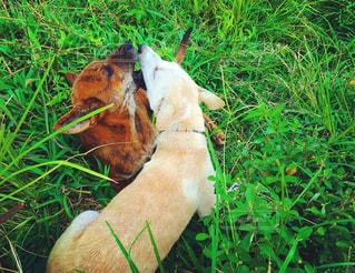 犬の写真・画像素材[262587]