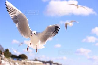 空を飛んでいるカモメ - No.1024892