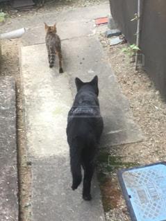 猫の写真・画像素材[247439]