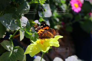 花の写真・画像素材[247638]