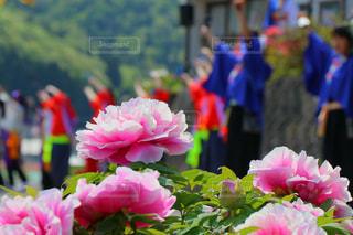 花のクローズアップの写真・画像素材[2392768]