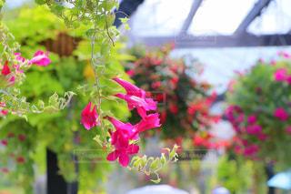 花のクローズアップの写真・画像素材[2392774]