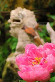 花の写真・画像素材[2396941]