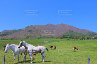 蒜山高原の写真・画像素材[2396947]