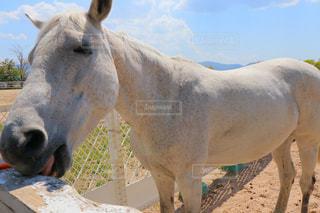 白馬の写真・画像素材[2396948]