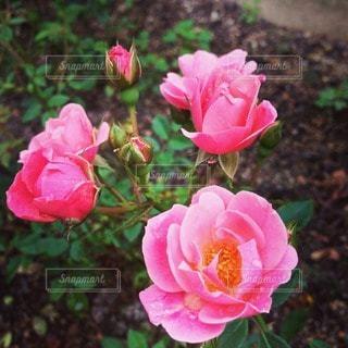 花の写真・画像素材[84788]