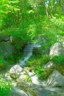 自然の写真・画像素材[20548]
