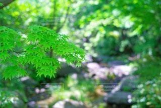 自然の写真・画像素材[20557]