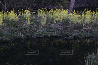 春の写真・画像素材[375611]