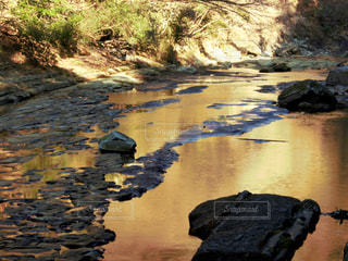 黄金色の渓流の写真・画像素材[1003280]