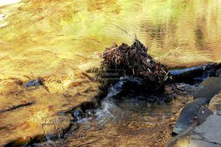 流れる金色の渓流の写真・画像素材[1003281]