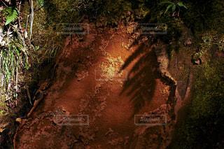 新しい葉と影の写真・画像素材[1003282]