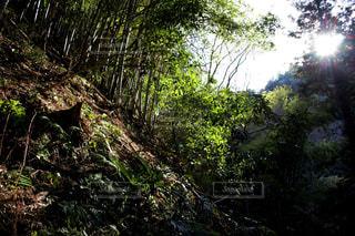早春の木漏れ日の写真・画像素材[1003283]
