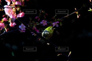 花とメジロの写真・画像素材[1012976]
