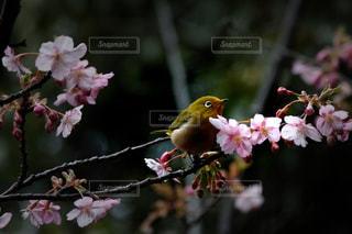 春めいたの写真・画像素材[1024098]