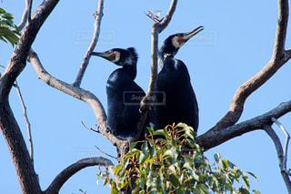 巣を守る夫婦の写真・画像素材[1039224]