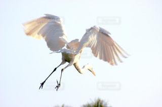 シラサギ飛び立ちの写真・画像素材[1109469]