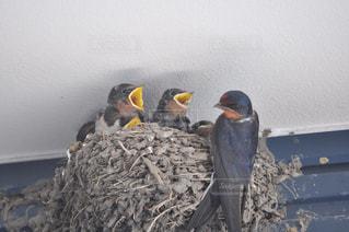 鳥の写真・画像素材[250502]