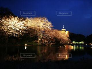 夜桜の写真・画像素材[759718]
