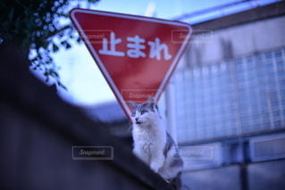No.8614 猫