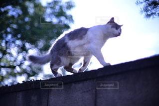 猫 - No.8612