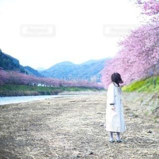 桜 - No.8536