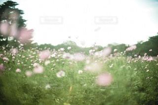 お花畑 - No.8487
