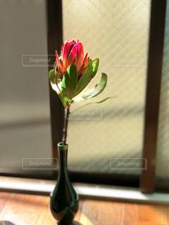 花の写真・画像素材[1093984]