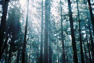 フォレスト内のツリーの写真・画像素材[1246174]
