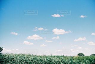 近くに緑のフィールドのの写真・画像素材[1246175]