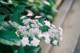 近くの緑の植物をの写真・画像素材[1246177]