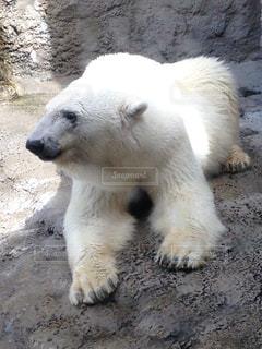 動物の写真・画像素材[249404]