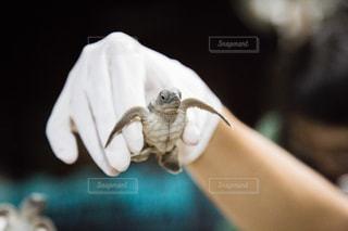 動物の写真・画像素材[249681]