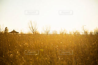 自然の写真・画像素材[250976]