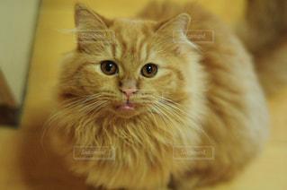 猫の写真・画像素材[288535]