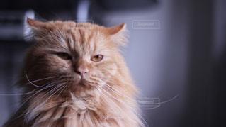 猫の写真・画像素材[288538]