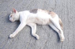 猫の写真・画像素材[249694]