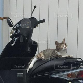猫 - No.249708