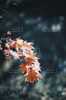 自然の写真・画像素材[250307]