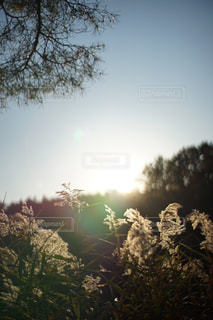 自然の写真・画像素材[253340]