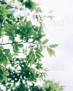 自然の写真・画像素材[518516]