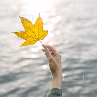 黄色い傘を持っている人の写真・画像素材[1612018]