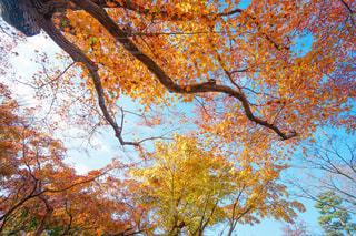 近くの木のアップの写真・画像素材[1612057]