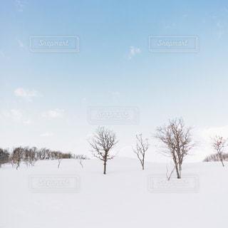 雪に覆われた木の写真・画像素材[1750248]