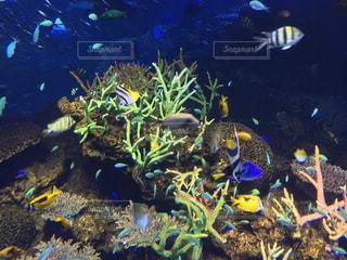 魚 - No.250459