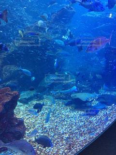 魚の写真・画像素材[250472]